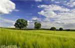 đồng cỏ
